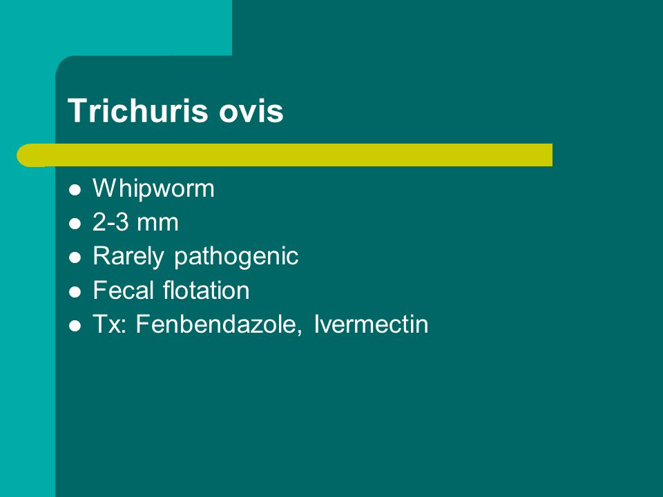 Trichuris ovis Whipworm 2-3 mm Rarely pathogenic Fecal flotation