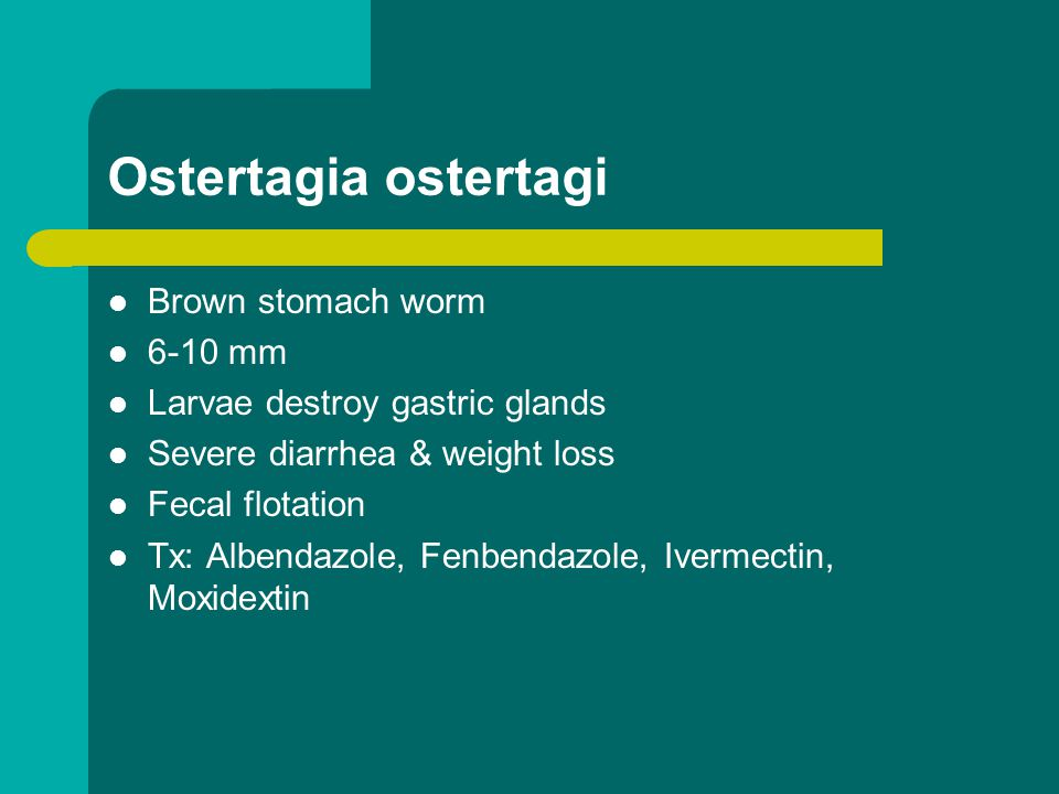 Ostertagia ostertagi Brown stomach worm 6-10 mm