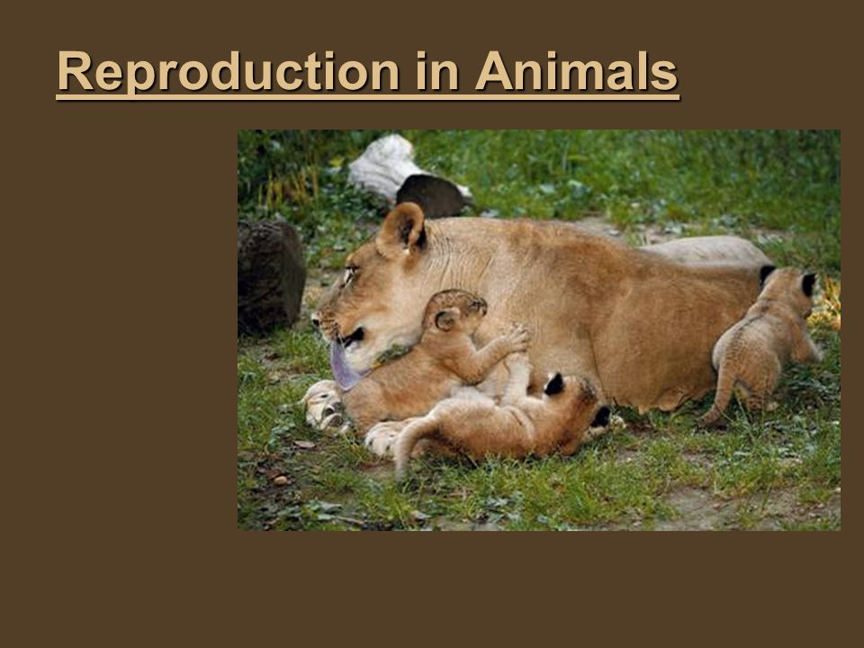 Reproduction in Animals - ppt download