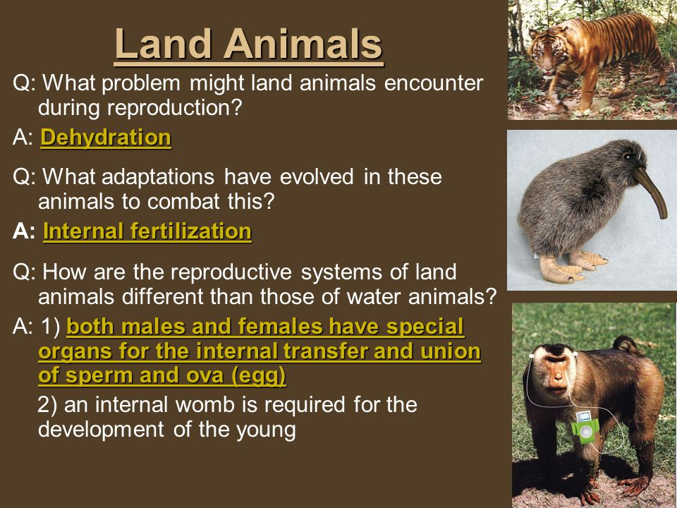 Land Animals Q: What problem might land animals encounter during reproduction A: Dehydration.