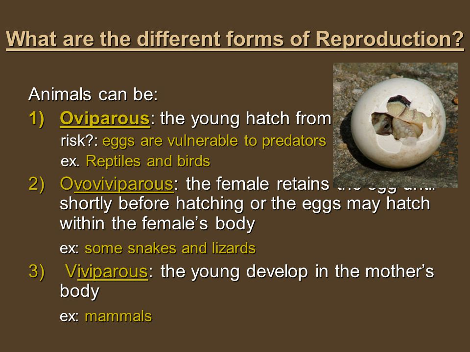 What are the different forms of Reproduction