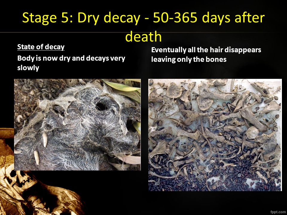 Stage 5: Dry decay - 50-365 days after death