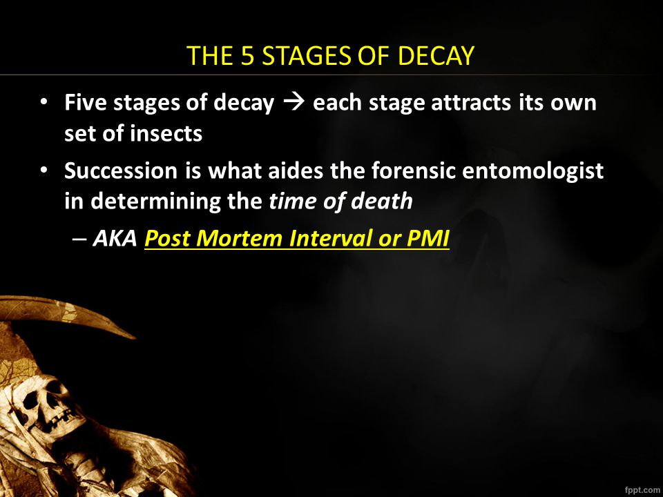 THE 5 STAGES OF DECAY Five stages of decay  each stage attracts its own set of insects.