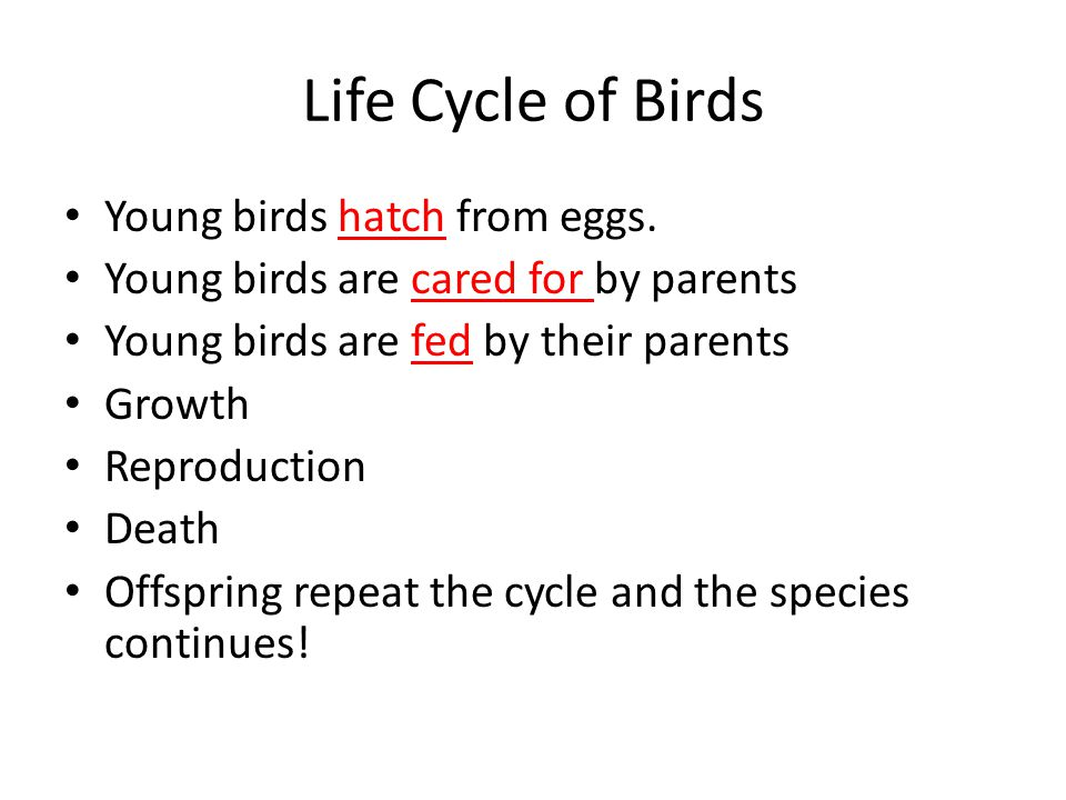 Life Cycle of Birds Young birds hatch from eggs.