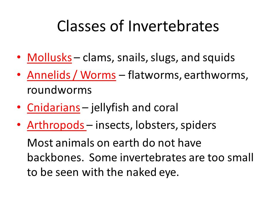 Classes of Invertebrates