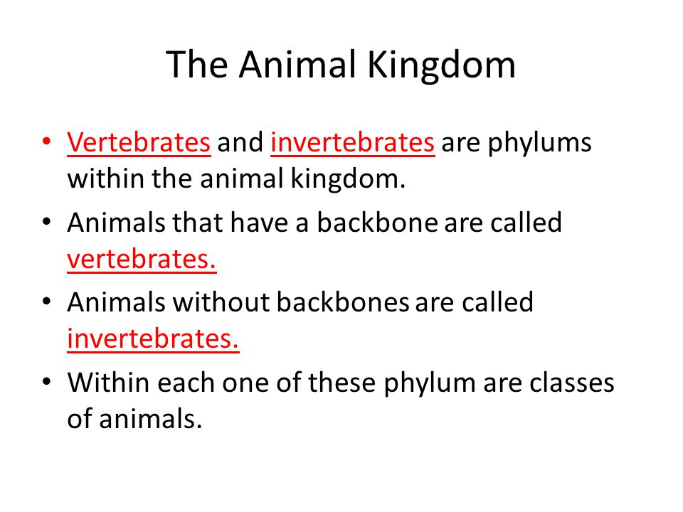 The Animal Kingdom Vertebrates and invertebrates are phylums within the animal kingdom. Animals that have a backbone are called vertebrates.