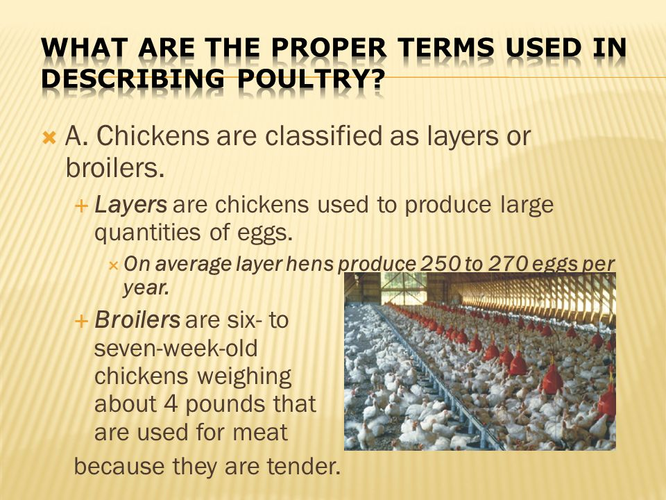 What are the proper terms used in describing poultry
