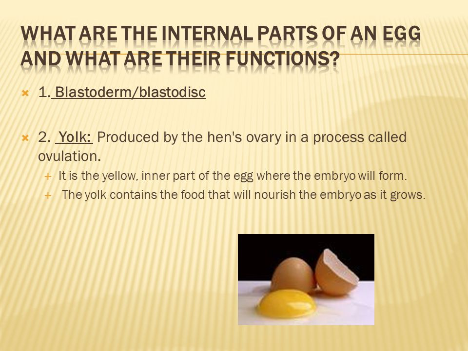 What are the internal parts of an egg and what are their functions