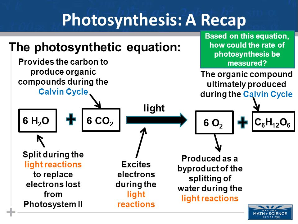 Photosynthesis: A Recap