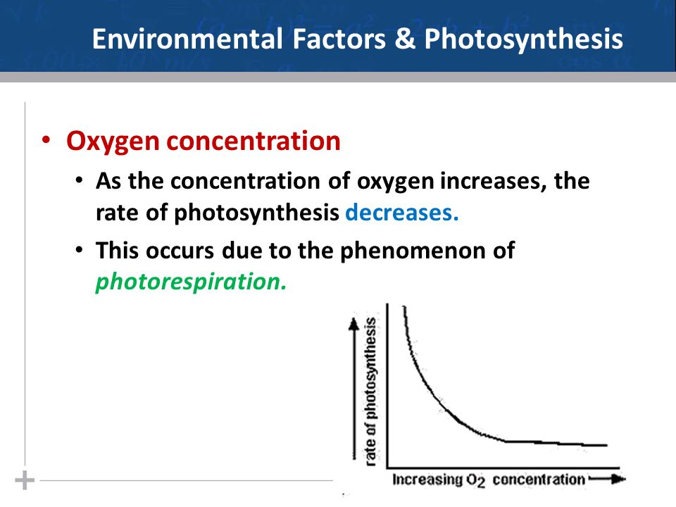 Environmental Factors & Photosynthesis