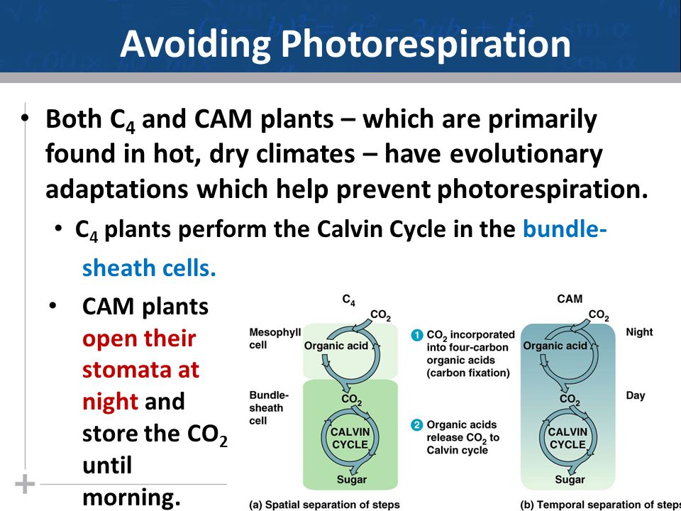 Avoiding Photorespiration