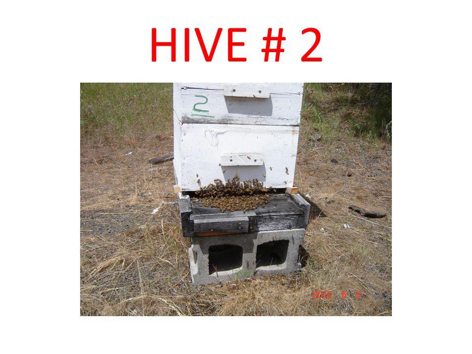 HIVE # 2
