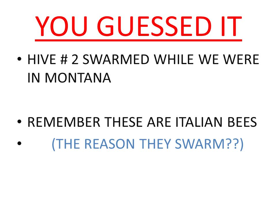 YOU GUESSED IT HIVE # 2 SWARMED WHILE WE WERE IN MONTANA