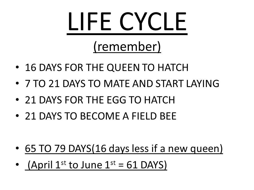 LIFE CYCLE (remember) 16 DAYS FOR THE QUEEN TO HATCH