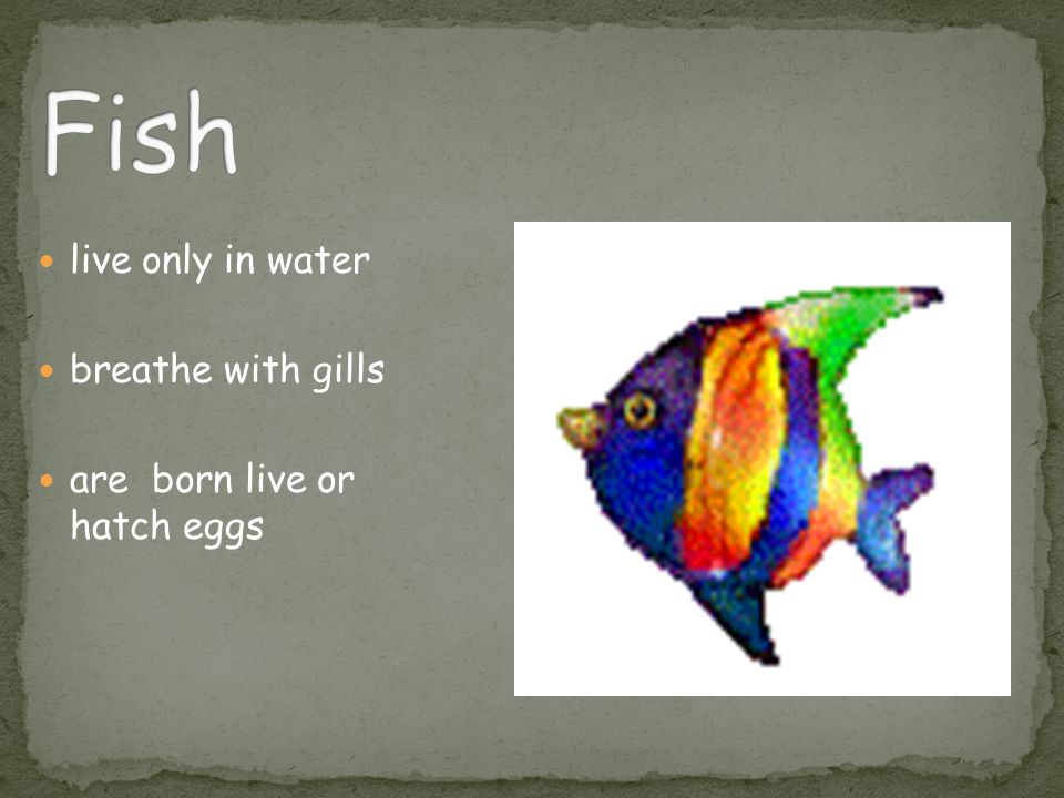 Fish live only in water breathe with gills are born live or hatch eggs