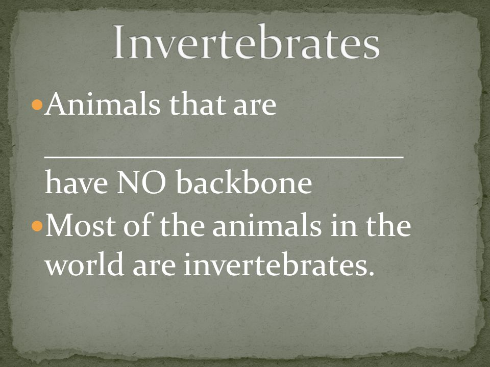Invertebrates Animals that are ______________________ have NO backbone