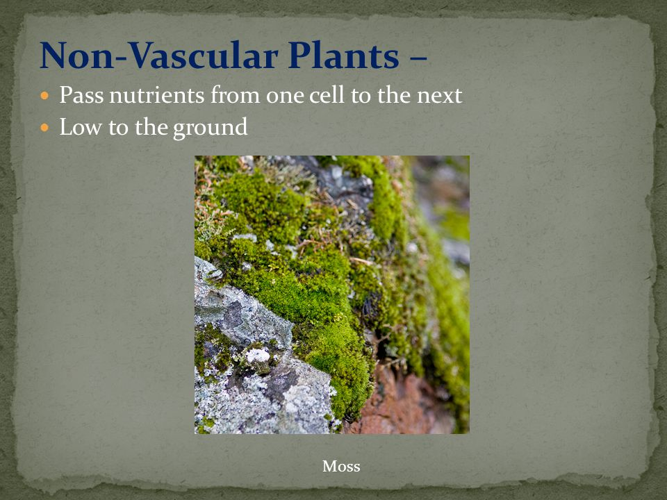 Non-Vascular Plants – Pass nutrients from one cell to the next