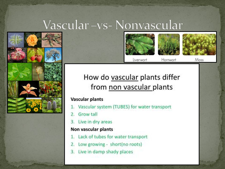 Vascular –vs- Nonvascular