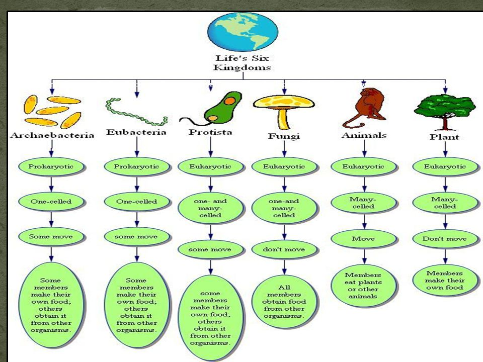 Scientists classify all living things into six major categories called kingdoms.
