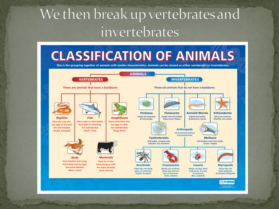 We then break up vertebrates and invertebrates