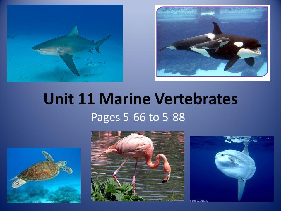 Unit 11 Marine Vertebrates