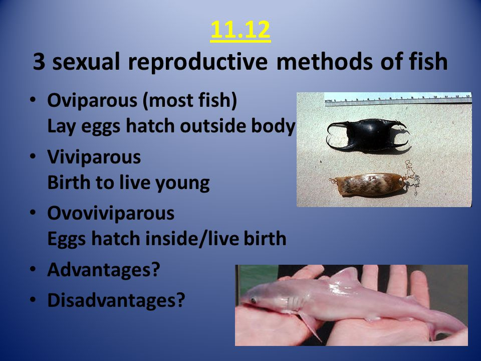 11.12 3 sexual reproductive methods of fish