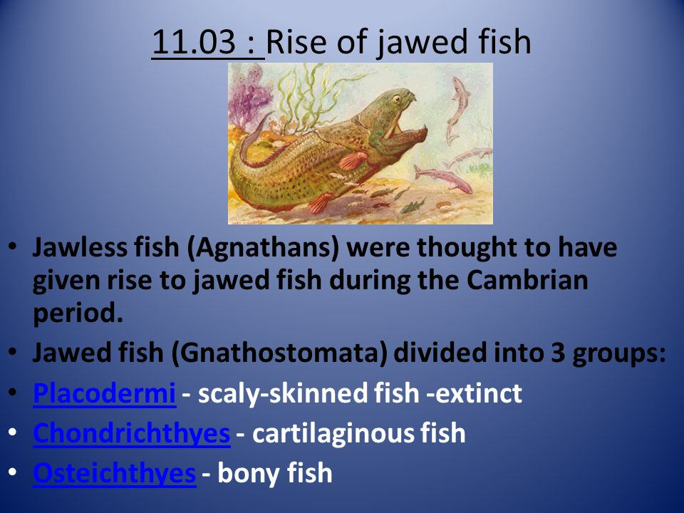 11.03 : Rise of jawed fish Jawless fish (Agnathans) were thought to have given rise to jawed fish during the Cambrian period.
