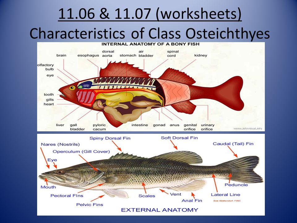 Bony fish external anatomy 940462 - camera-lucida.info