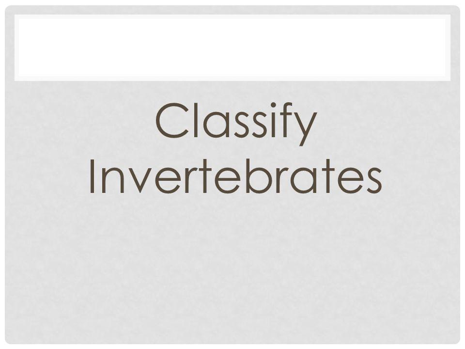 Classify Invertebrates