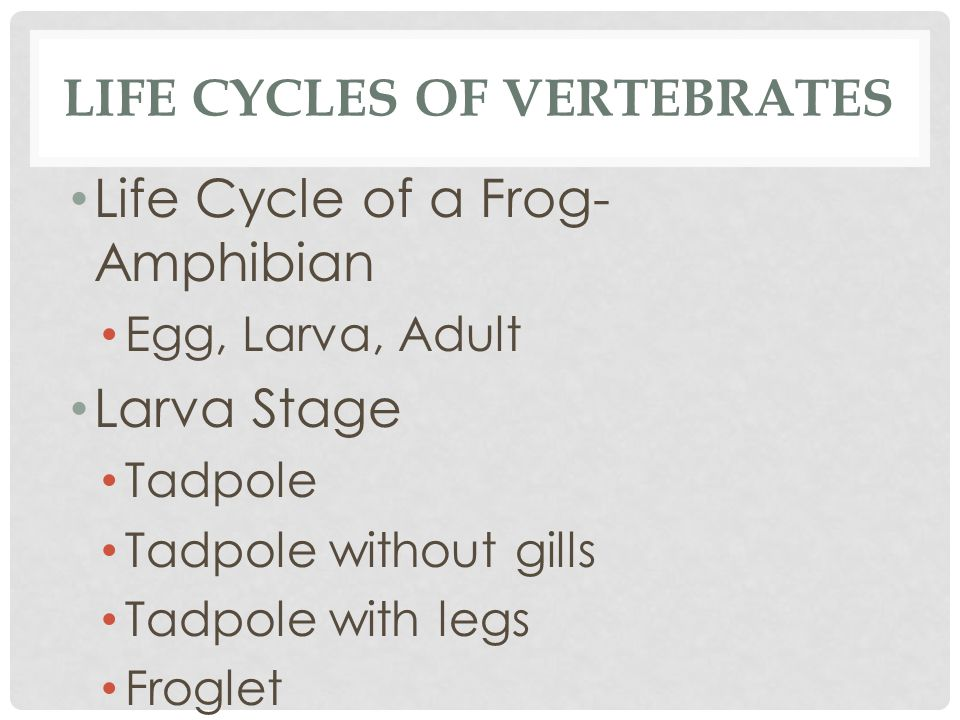 Life Cycles of vertebrates