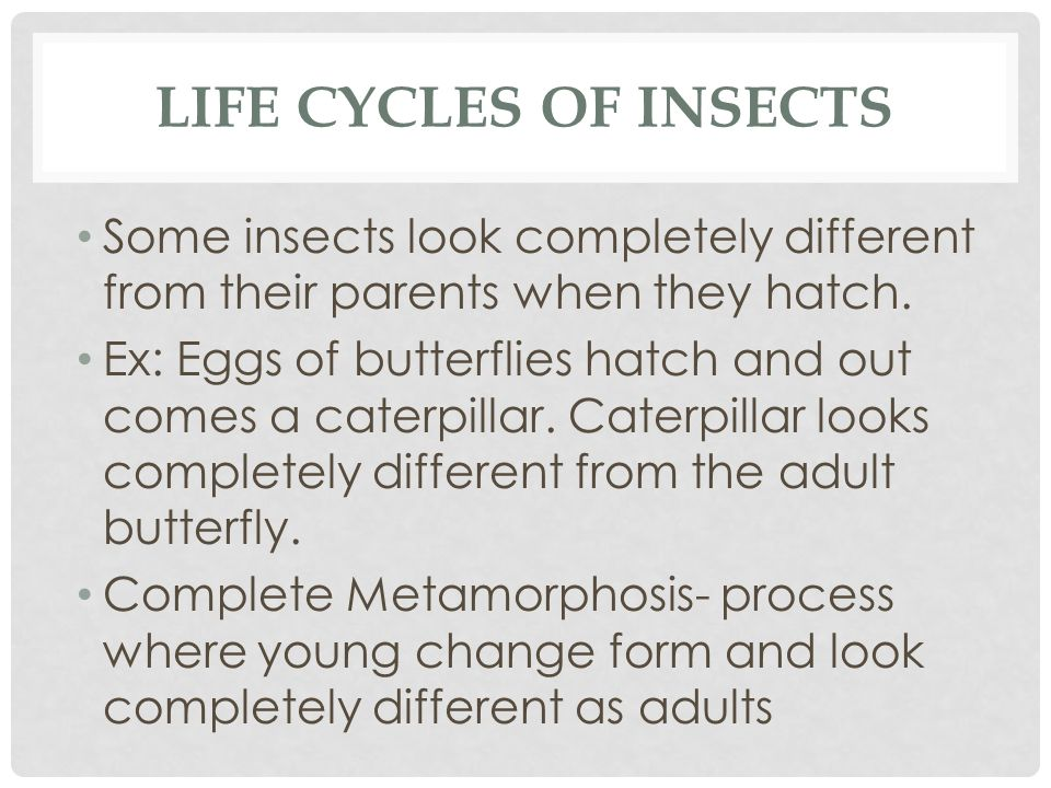 Life Cycles of Insects Some insects look completely different from their parents when they hatch.