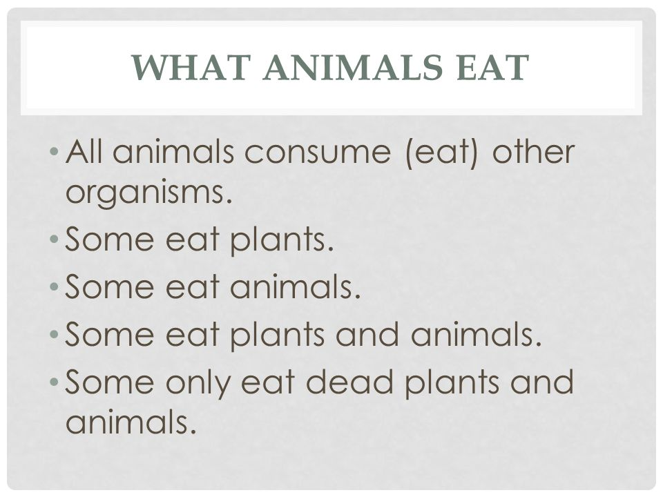 What Animals eat All animals consume (eat) other organisms.