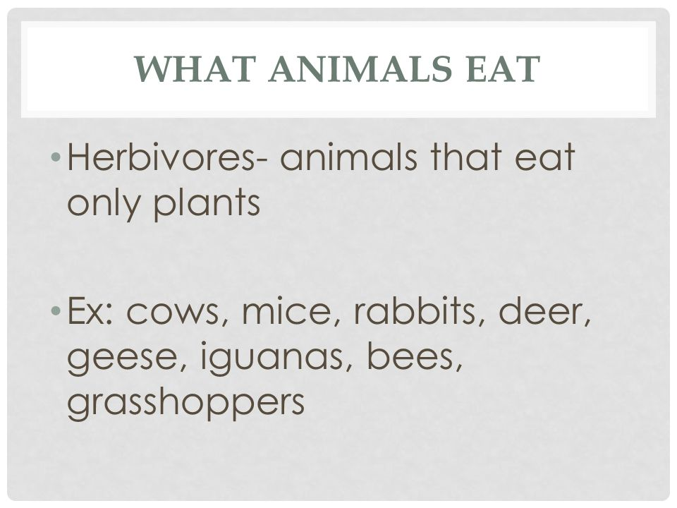What Animals eat Herbivores- animals that eat only plants.