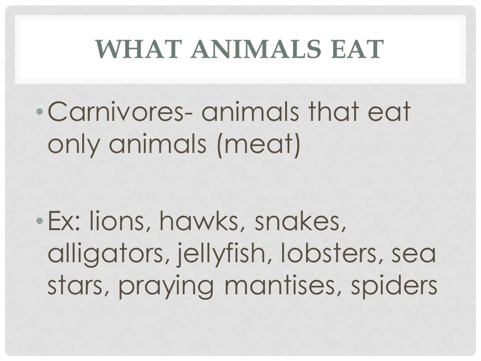 What Animals eat Carnivores- animals that eat only animals (meat)