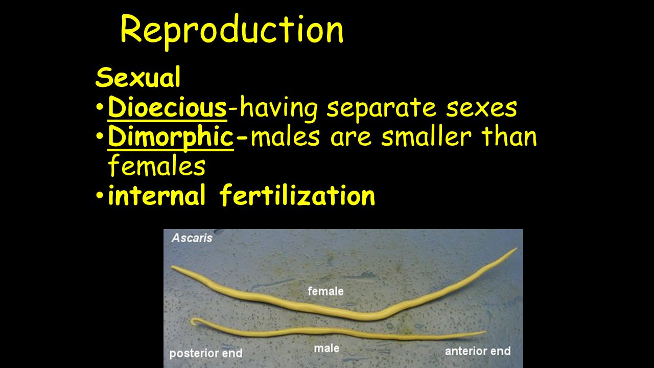 Reproduction Sexual Dioecious-having separate sexes