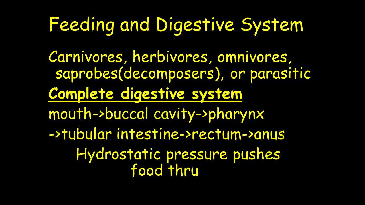 Feeding and Digestive System