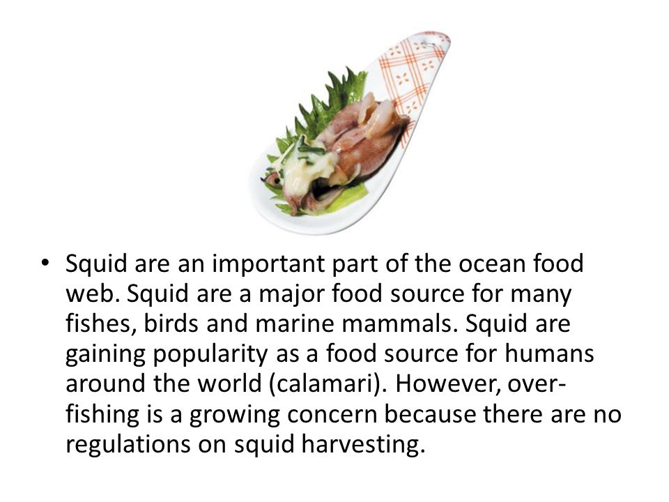 Squid are an important part of the ocean food web
