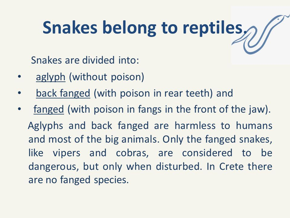 Snakes belong to reptiles.