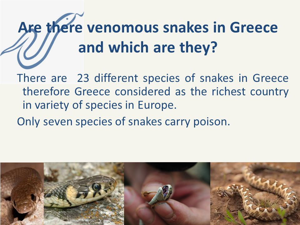 Are there venomous snakes in Greece and which are they
