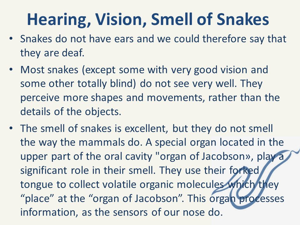 Hearing, Vision, Smell of Snakes