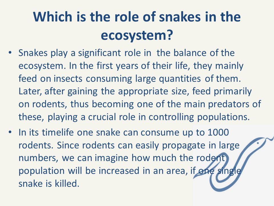 Which is the role of snakes in the ecosystem