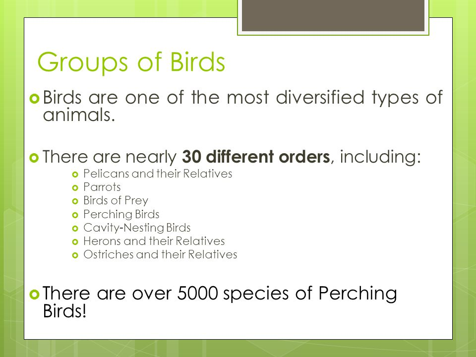 Groups of Birds Birds are one of the most diversified types of animals. There are nearly 30 different orders, including: