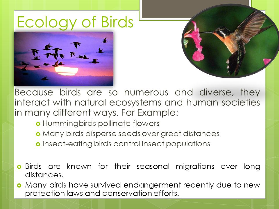 Ecology of Birds