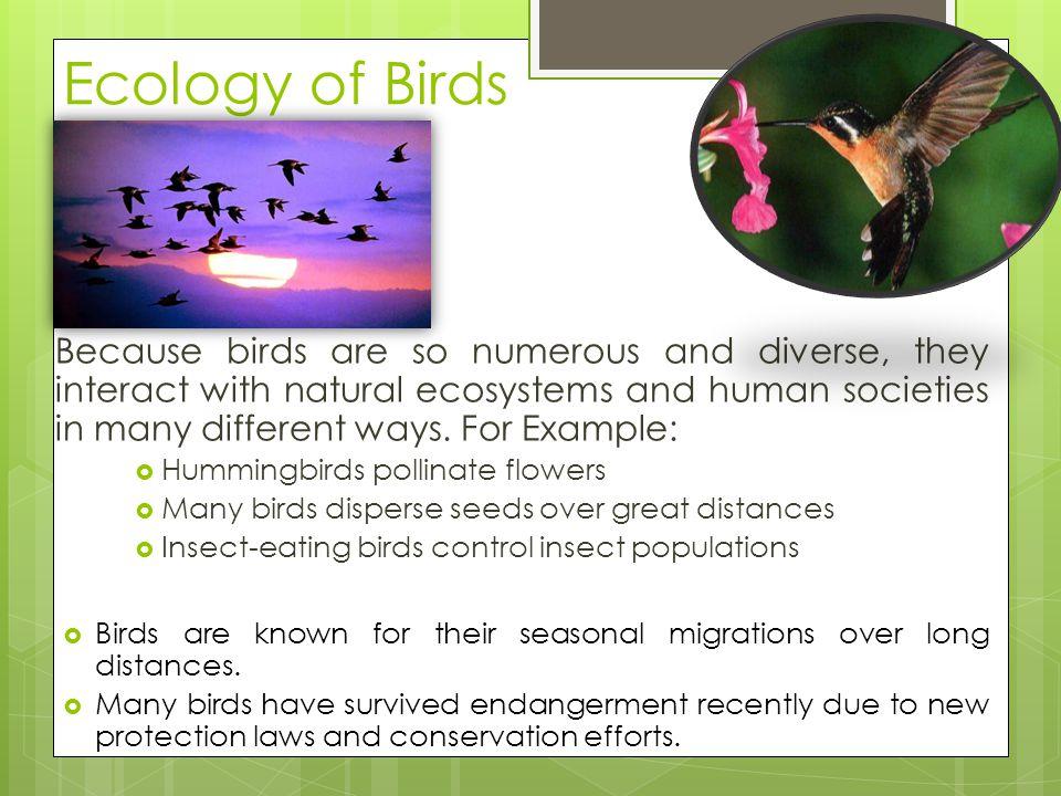 Ecology of Birds