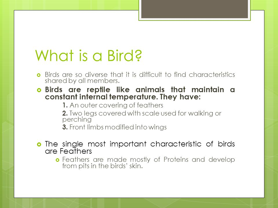 What is a Bird Birds are so diverse that it is difficult to find characteristics shared by all members.