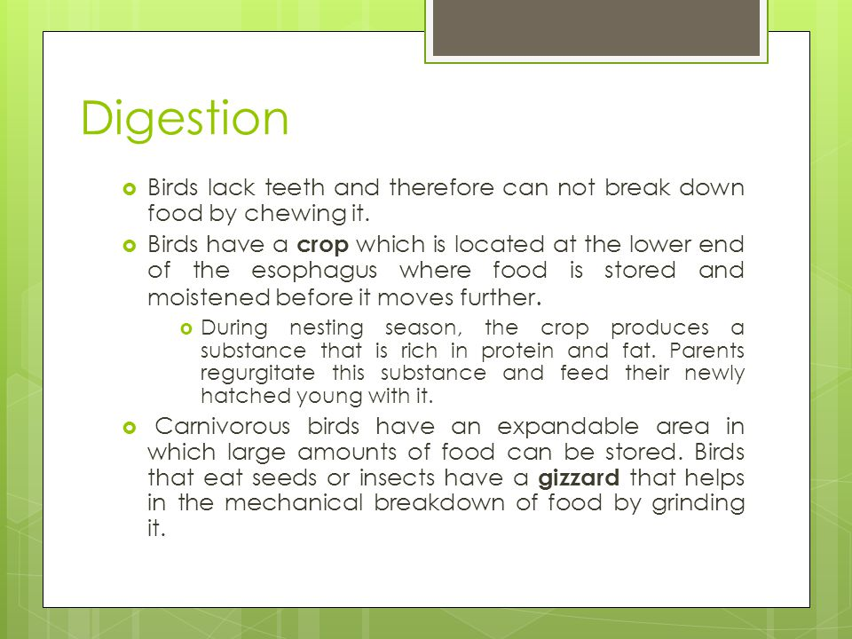 Digestion Birds lack teeth and therefore can not break down food by chewing it.