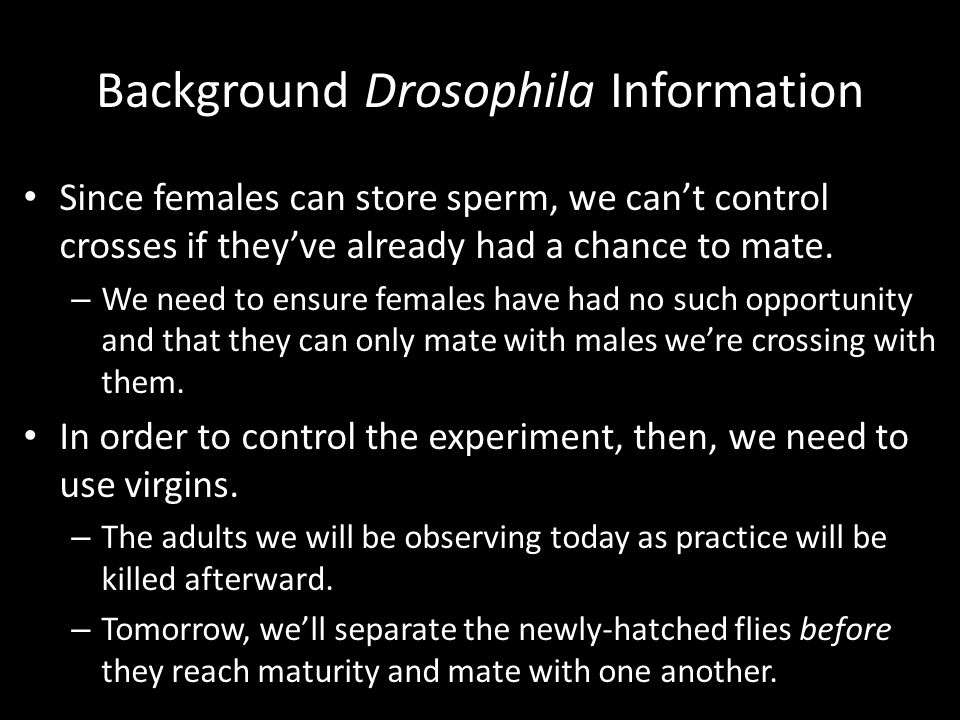Background Drosophila Information