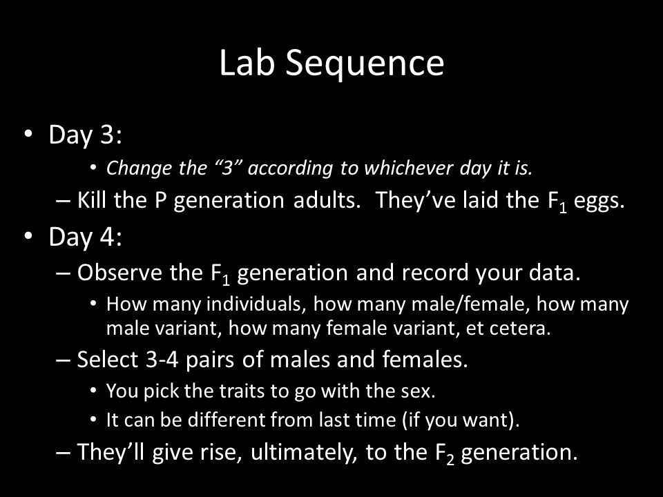 Lab Sequence Day 3: Change the 3 according to whichever day it is. Kill the P generation adults. They've laid the F1 eggs.