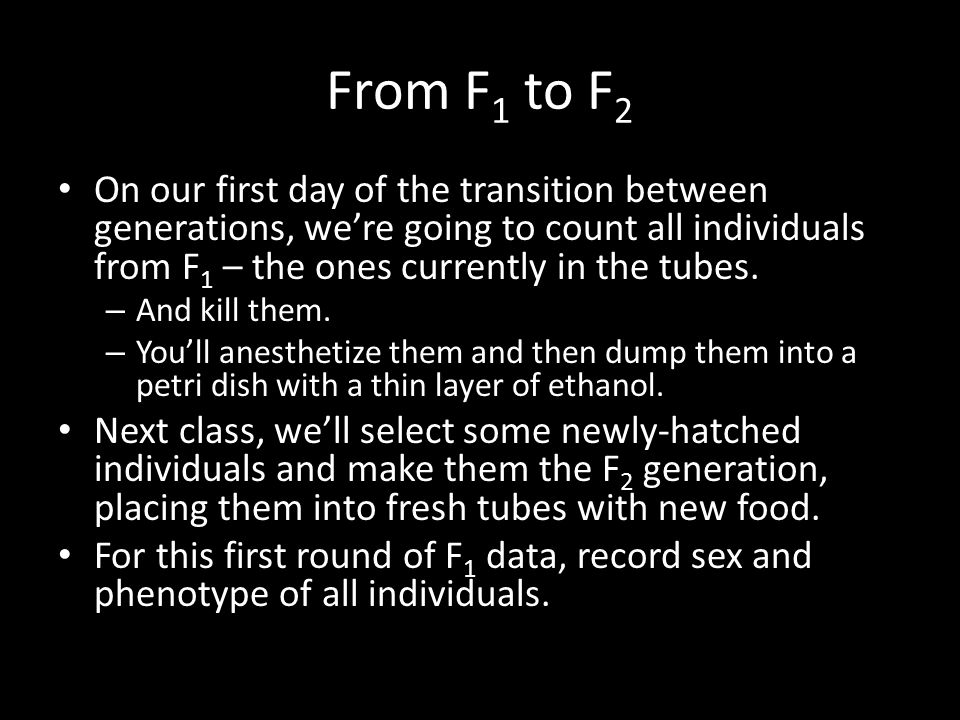 From F1 to F2 On our first day of the transition between generations, we're going to count all individuals from F1 – the ones currently in the tubes.