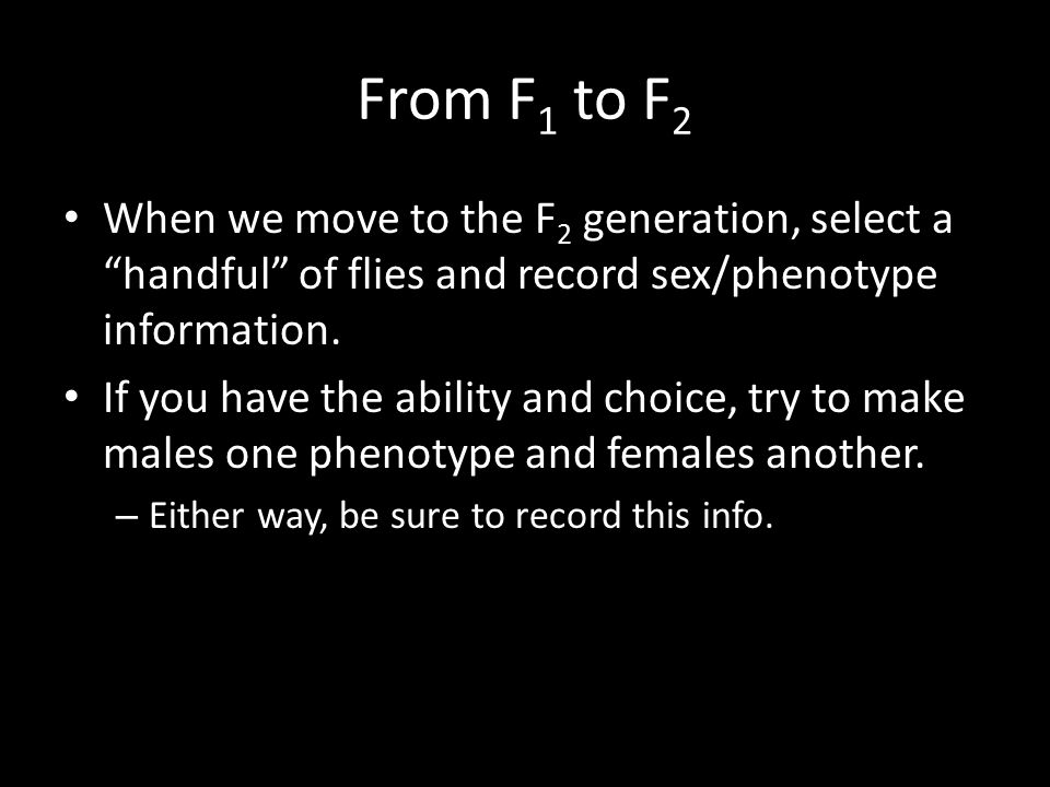 From F1 to F2 When we move to the F2 generation, select a handful of flies and record sex/phenotype information.